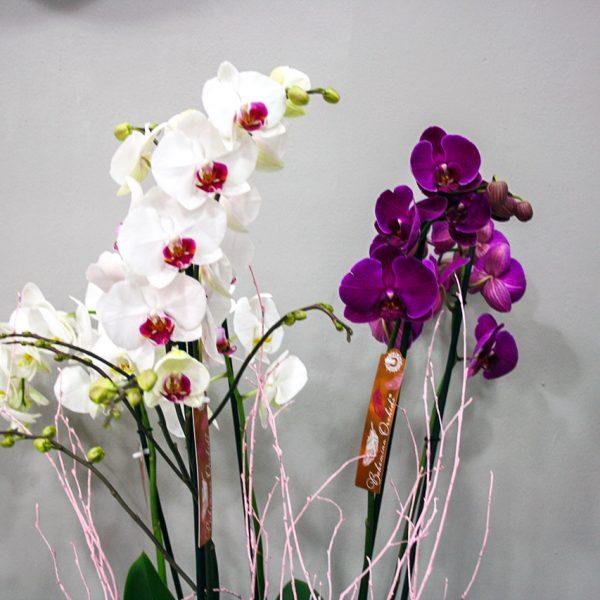 Composición Orquídeas · Cestas y Composiciones · Floristería Los Santos Niños · Alcalá de Henares · Madrid