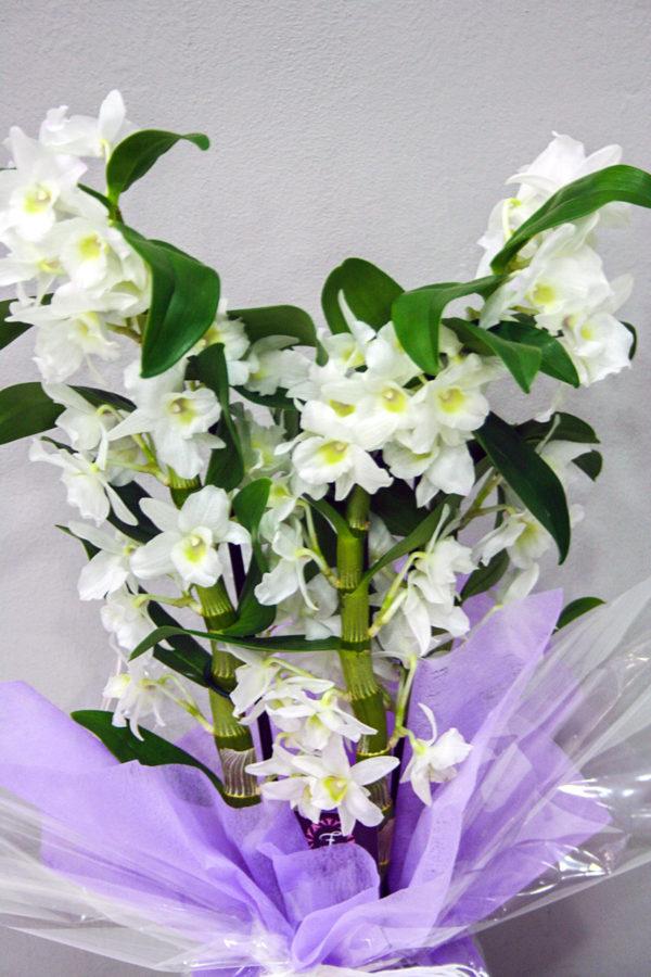Dendrobium Blanco · Plantas Decorativas · Floristería Los Santos Niños · Alcalá de Henares · Madrid