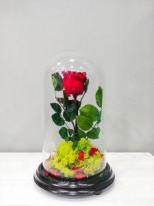Cúpula de Cristal con base de madera con rosa eterna y musgo preservado
