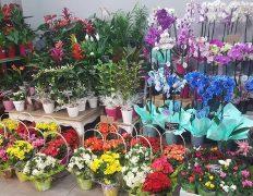 Plantas y flores para dia de la madre · Floristeria los santos niños · Alcala de henares · Madrid